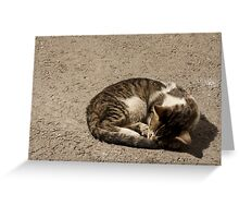 Sweet Cat - Tunisia Greeting Card