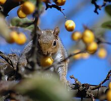 Squirrels that Lunch by Russell Bruce