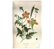 Favourite flowers of garden and greenhouse Edward Step 1896 1897 Volume 2 0103 Loasa Lateritia Poster