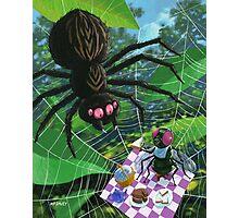spider web picnic Photographic Print