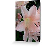 Peach Glory Greeting Card