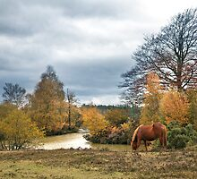 Autumn at Cadman's Pool by Krys Bailey