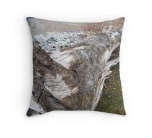Too Many Faces To Count ~ Lake Erie, Lackawanna, NY Throw Pillow
