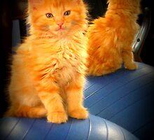 Orange Kitty by AngieBanta