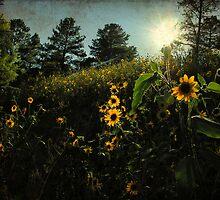Arizona wildflowers part deux by LizzieMorrison