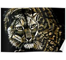 Leopold the Snow Leopard Poster