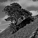 Tree above Penralt, Snowdonia by JMChown