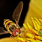 Pollination 20 by Gareth Jones