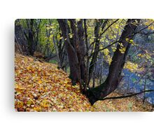 Trees in Autumn Forest Canvas Print