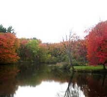 Windsor Autumn Reflection on Loomis Campus by LisaO