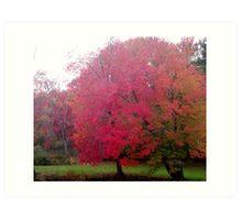 Autumn Foliage on Loomis Campus Art Print