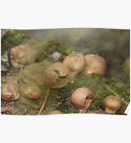 Common Puffball liberating spores Poster