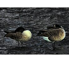 2 Geese In The River Photographic Print