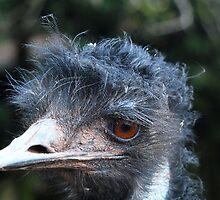 Emu keeping watch - South Lakes Wildlife Park by gazelle