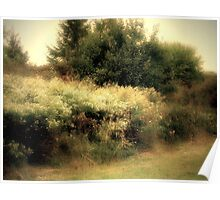 Wildwood Flower Poster