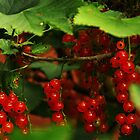 Red currants at our summer cottage by Tarolino