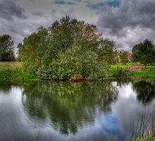 Shrub Reflection by Chris Thaxter