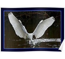 The Fishing Egret Poster