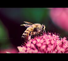 Summer in Greece - The Bee by RasmusKjeldmand