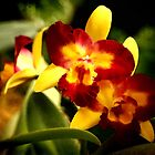 Yellow Orchids 6 by Janis Lee Colon