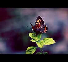 Summer in Greece - The Butterfly by RasmusKjeldmand