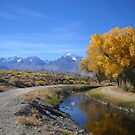 Autumn Reflections  Dedicated To Fellow Dirt Road Lover Ruth Lambert by marilyn diaz