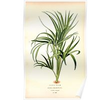 Favourite flowers of garden and greenhouse Edward Step 1896 1897 Volume 4 0227 Curlt Palm Poster