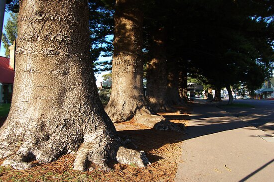 Street Trees in Esperance by Eve Parry