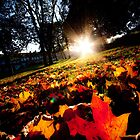 Autumn Leaves by designandframe