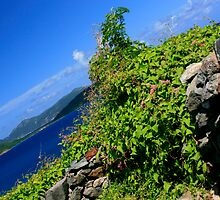 Vine with the view by jstoeber