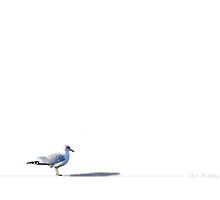The sea gulls are back..... by DaveHrusecky