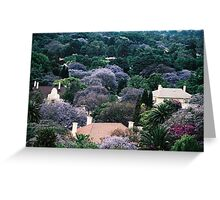 Canopy of purple - the trees of Johannesburg. Greeting Card