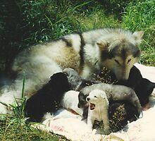 Tundra's Pups by Asoka