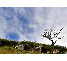 """One Tree Hill"", North Yorkshire, England Photographic Print"