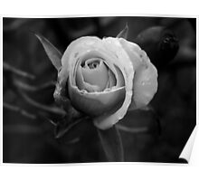 Black and White Bloom Poster