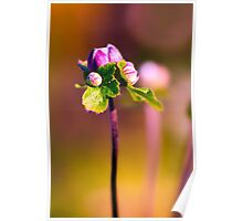 A late bloomer at sunset Poster