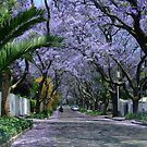 An avenue of jacarandas. Parkview, Johannesburg, South Africa by Fineli