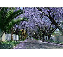 An avenue of jacarandas. Parkview, Johannesburg, South Africa Photographic Print