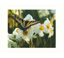 Swallowtail and daffodils Art Print