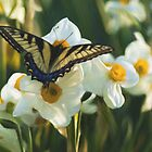 Swallowtail and daffodils by jabo7