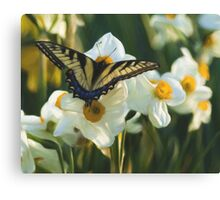 Swallowtail and daffodils Canvas Print
