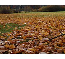 Leaves on the Ground! Photographic Print