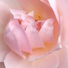 Pink petals by jabo7