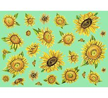 Sunflowers Mint Green Photographic Print