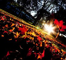 Autumn Leaves with Colorfull Sunlighting by designandframe