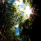 Warm Sunlight, Leaves and Reflection by designandframe