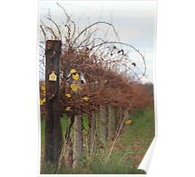 Winter vinyard 2 Poster
