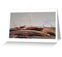 Outback beauty Greeting Card
