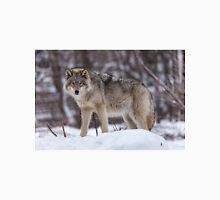 Timber wolf in winter T-Shirt