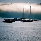 Misty Morning on Cowichan Bay... by Carol Clifford
